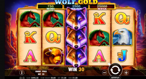 wolf gold slot game play